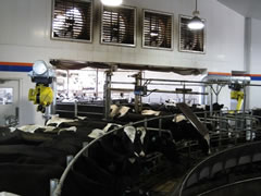 The rotary milking advantage